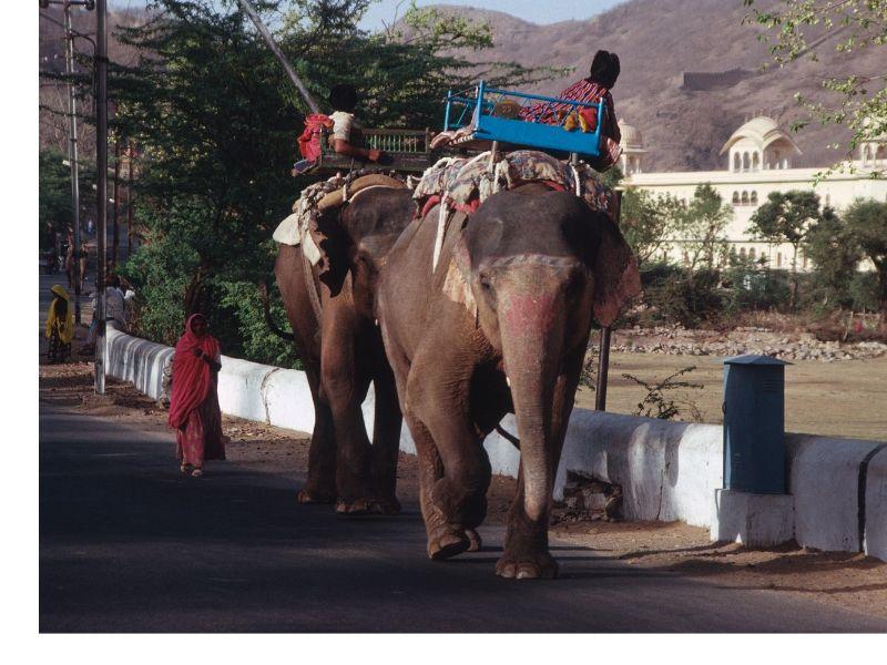 centre leela - formation massage inde - sejour ayurvedique inde - éléphant